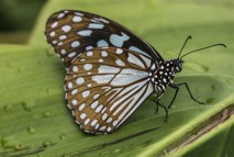 brown-and-white-butterfly