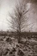 norland-tree-study-02