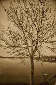 sepia-tree