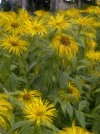 sunflowers-watercolour
