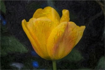 tulip-oil-painting-effect
